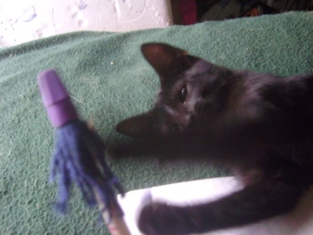 A pencil topper with a black cat.
