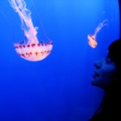 Woman in silhouette looking at bright red and white jellyfish.