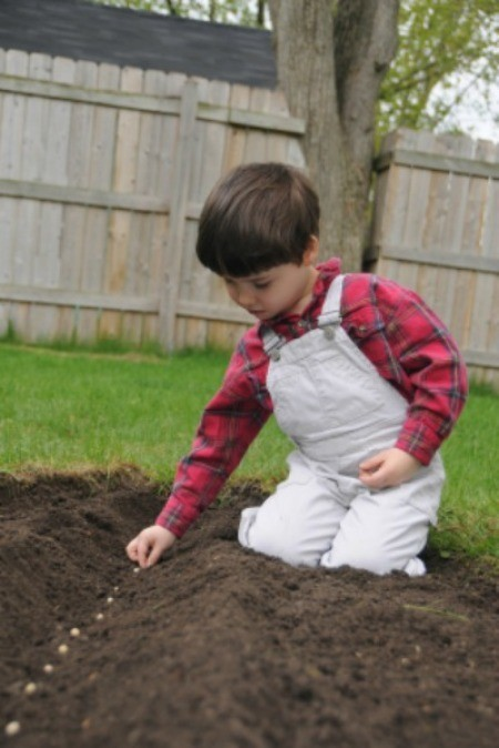 Boy sowing seeds in garden