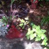 Red Fish Planter in Garden