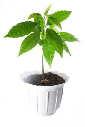 Plant in white pot against white background