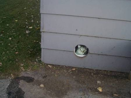 A cat photo over a hole in the garage where he used to live.