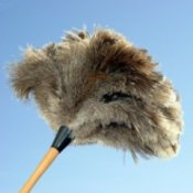 Ostrich feather duster against a blue sky.