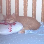An orange cat sleeping in a crib.