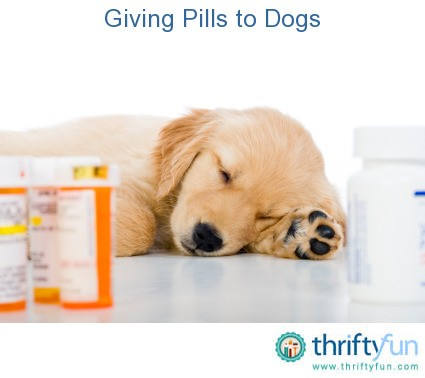 Can I Give My Dog Pill In Hot Dog