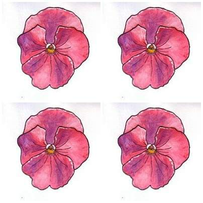 Pink Pansies Drawing