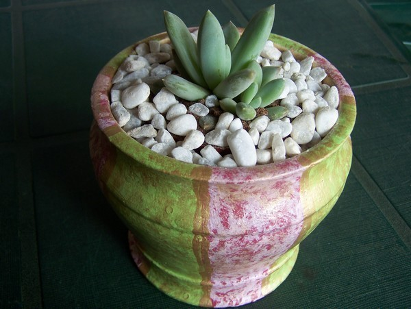Add plant to hand-painted pot