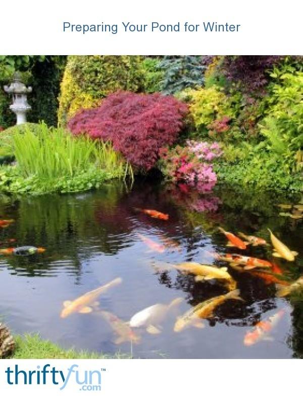 Preparing Your Pond For Winter Thriftyfun