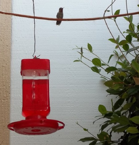 hummingbird on Wire Near Feeder