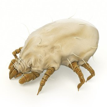 Rendering of a dust mite on a white background.