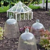 Cold frame and glass cloches for plant protection.