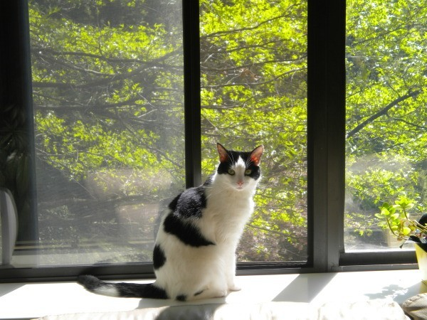 Cat sitting by a window.
