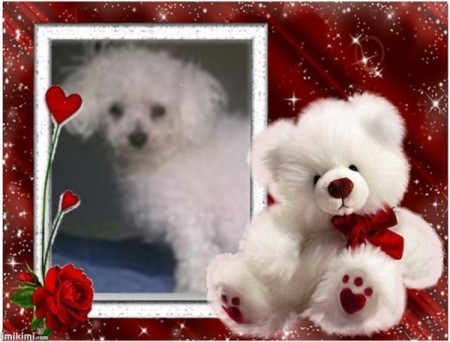 Chi-Chi with Teddy Bear and Hearts
