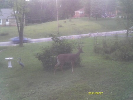 Looking out Window at One Deer in Front Yard