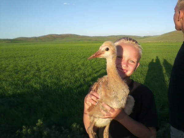 Young Boy Holding up Baby Sandhill Crane
