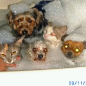 Three Dogs and a Cat in the Bathtub