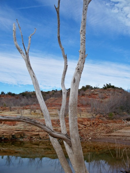 Dead Tree in Foreground of Landscape With Water
