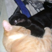 PNut and Tommy, Cats Sleeping Together