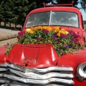 Flowers growing in an old truck.