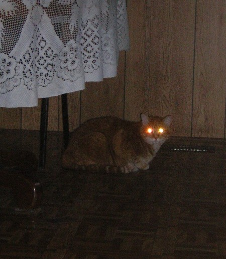 Fry the Cat Lying Under Kitchen Table With Glowing Eyes