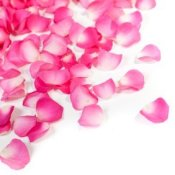 Photo of pink rose pedals.