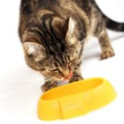 Cat eating out of a yellow bowl.