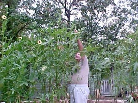Man Picking Okra