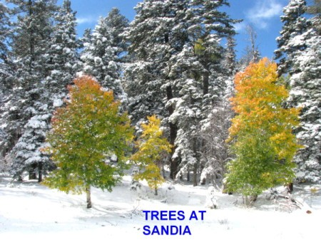 Snowfall on Trees at Sandia