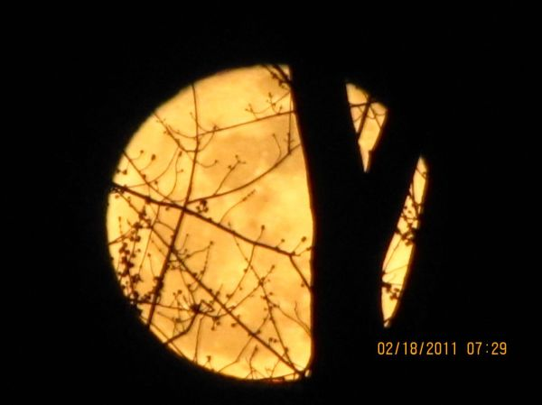 Harvest Moon Through the Trees