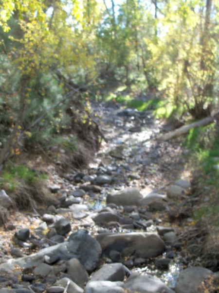 Stream in White Mountain Wilderness
