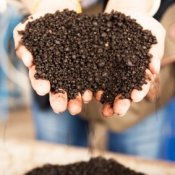 Hands holding organic fertilizer.