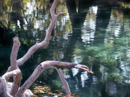 Tree reflected in water with deadwood in foreground.