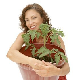 Young woman holding a large potted tomato plant.