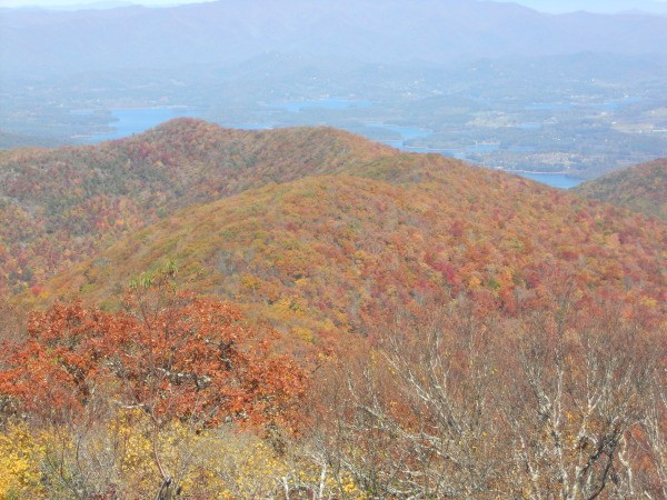 Fall Colors at Brasstown Bald