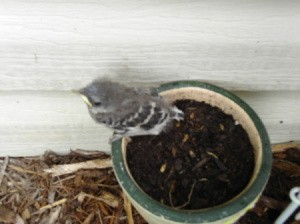 Baby Bird in Planter