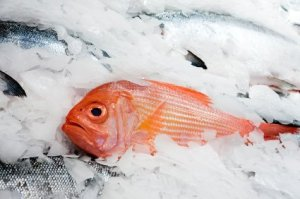 Red Snapper in Ice