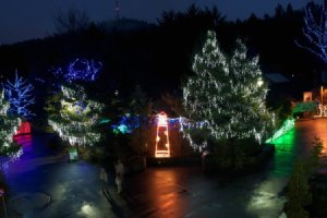 Oregon Zoolights