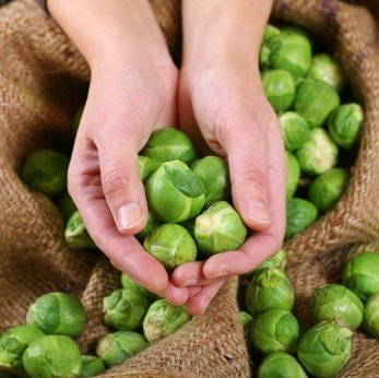 Brussels Sprouts in a burlap bag