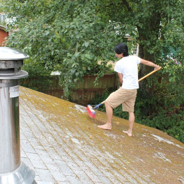 Removing Moss From A Roof Thriftyfun