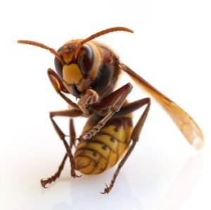how to get wasp away from house