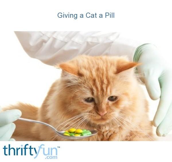 Giving A Cat A Pill Thriftyfun