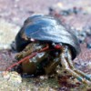 Closeup of Hermit Crab on the Beach