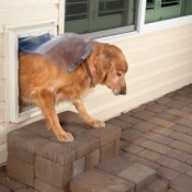 Dog Going out Pet Door