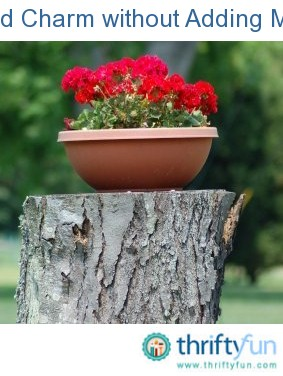 Adding charm to your garden thriftyfun for Fancy flower pots