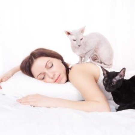 Cats laying on a woman sleeping in bed.