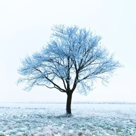 Tree Covered with frost