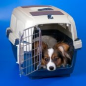 Crate Training a Puppy, Young Papillon in a crate.