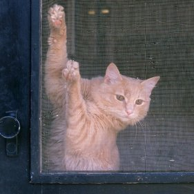 Cat scratching at a screen door.
