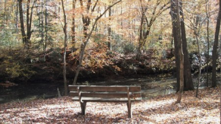 A park bench in the woods in fall.
