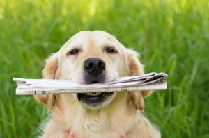 Dog With a Fetched Newspaper